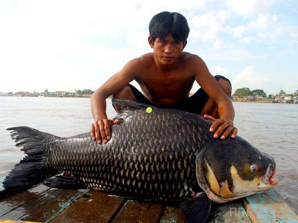 Огромные рыбины (9 фото)