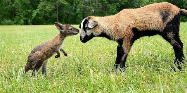 Заряд позитива - забавные животные, часть 52 (43 фото)