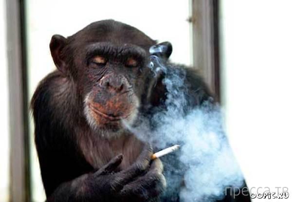 За сигаретами....
