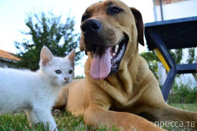 Заряд позитива - забавные животные, часть 53 (42 фото)