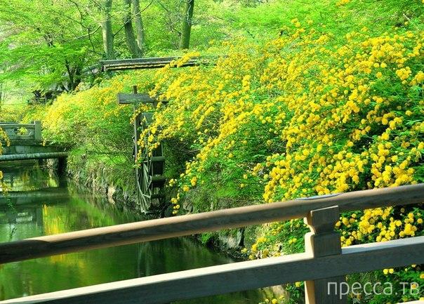 Япония. Прогулка по Киото (10 фото)