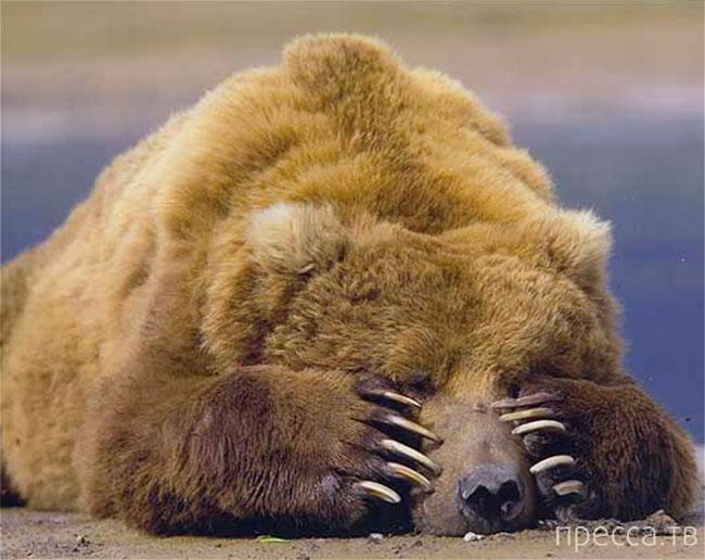 Медвежья услуга (5 фото)