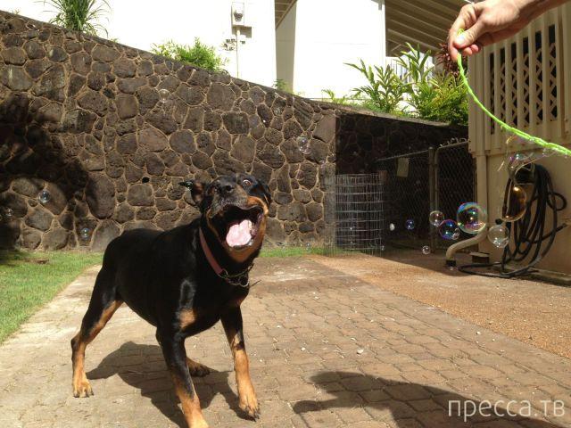 Заряд позитива - забавные животные, часть 54 (45 фото)