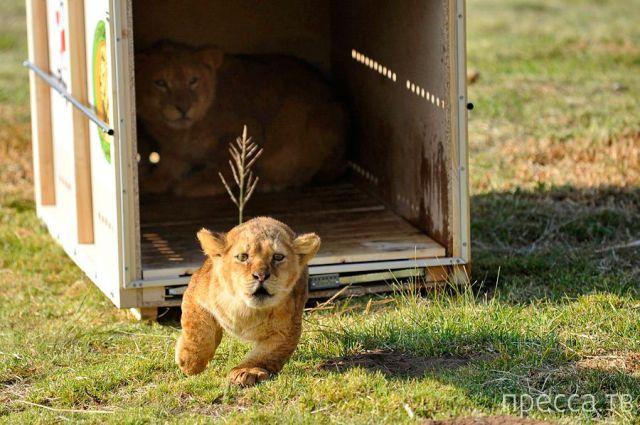 Заряд позитива - забавные животные, часть 56 (47 фото)