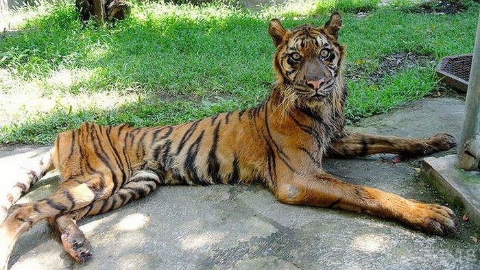 Зоопарк Сурабая - смерть за решеткой (9 фото)