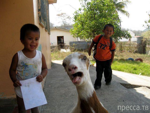 Поднимаем настроение - прикольные фотографии, часть 59 (102 фото)