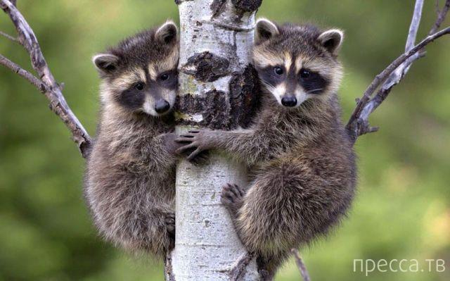 Заряд позитива - забавные животные, часть 58 (40 фото)