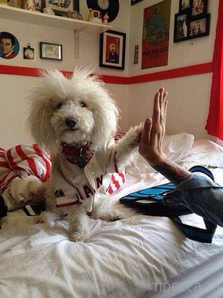 Заряд позитива - забавные животные, часть 57 (41 фото)
