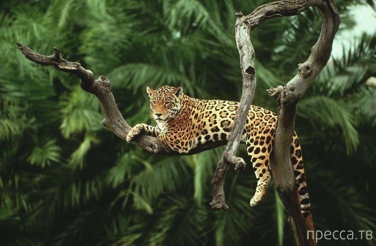Большое путешествие по лесам Амазонки (34 фото)