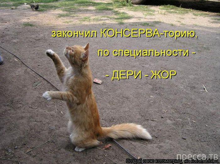 Веселые котоматрицы (31 фото)