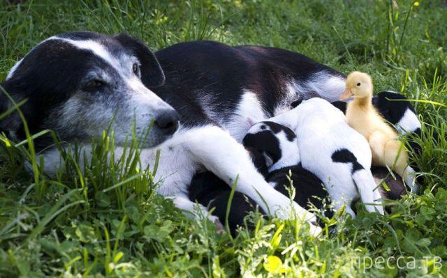 Заряд позитива - забавные животные, часть 61 (43 фото)