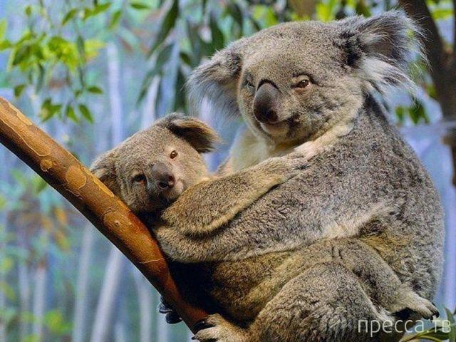 Интересные факты об Австралии...
