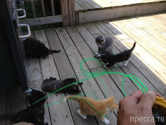 Заряд позитива - забавные животные, часть 63 (50 фото)