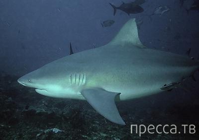 Как выжить, если на тебя напала акула... (6 фото)