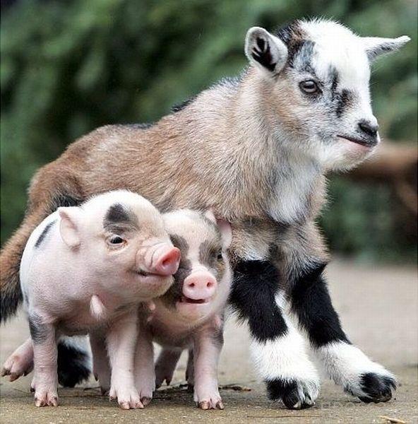 Заряд позитива - забавные животные, часть 66 (41 фото)