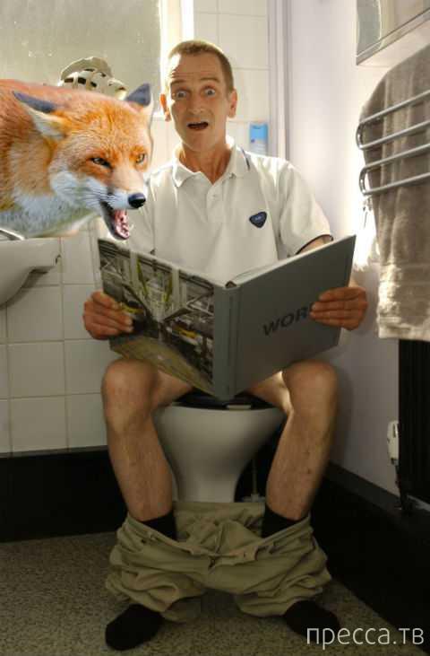 Агрессивная лиса напала на плотника в его собственном туалете (2 фото)
