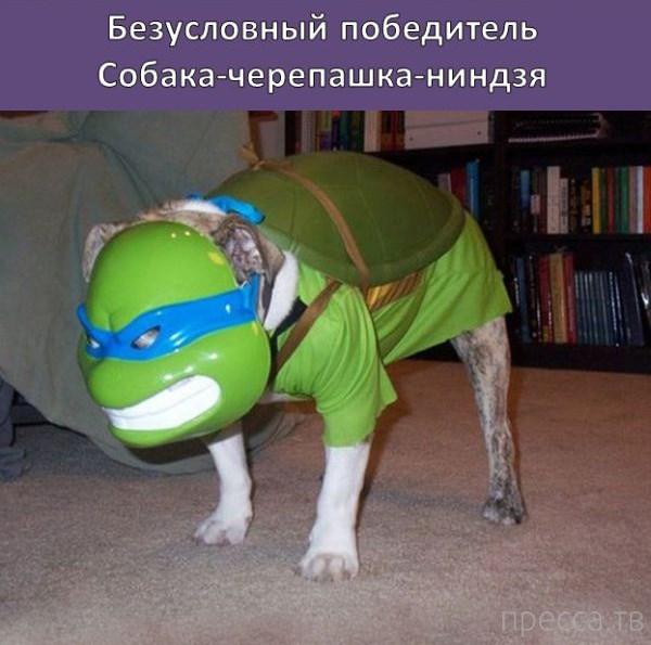 Российский косплей (27 фото)