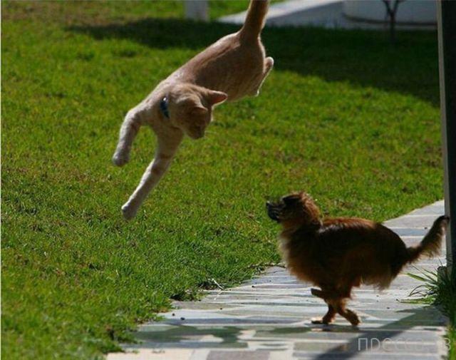 Милые и забавные животные, часть 7 (44 фото)