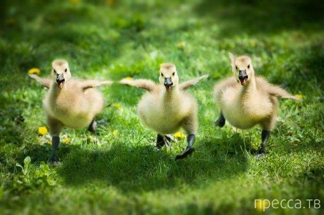 Милые и забавные животные, часть 8 (45 фото)