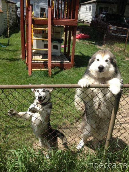 Милые и забавные животные, часть 9 (42 фото)