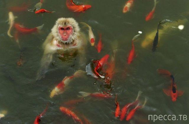 Милые и забавные животные, часть 7 (48 фото)