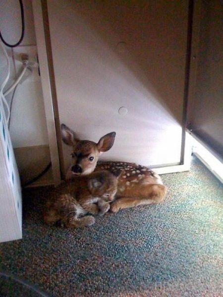 Милые и забавные животные, часть 10 (46 фото)