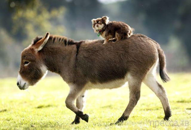 Милые и забавные животные, часть 11 (42 фото)
