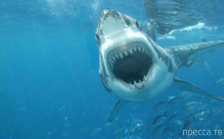 Ученые создали костюмы, защищающие пловцов от акул ... (6 фото)