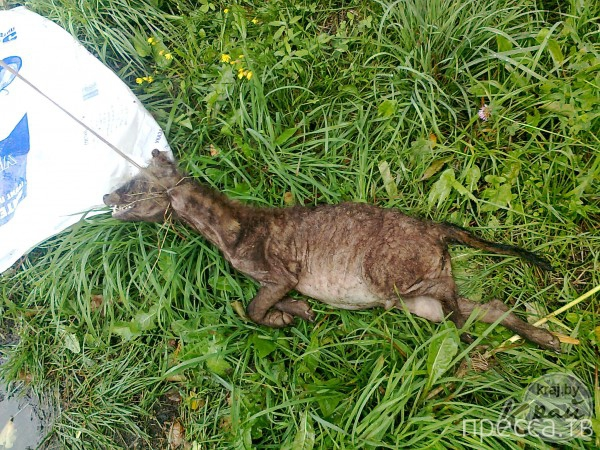 В Докшицком районе Беларуси убили неизвестное животное ...