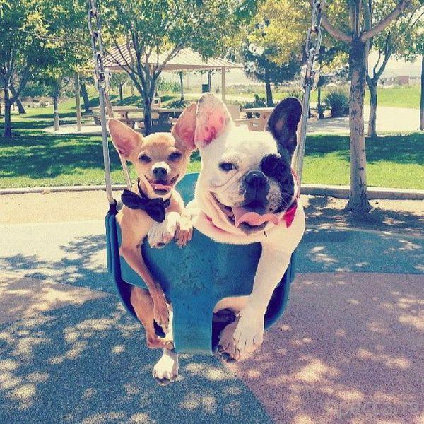 Милые и забавные животные, часть 17 (39 фото)