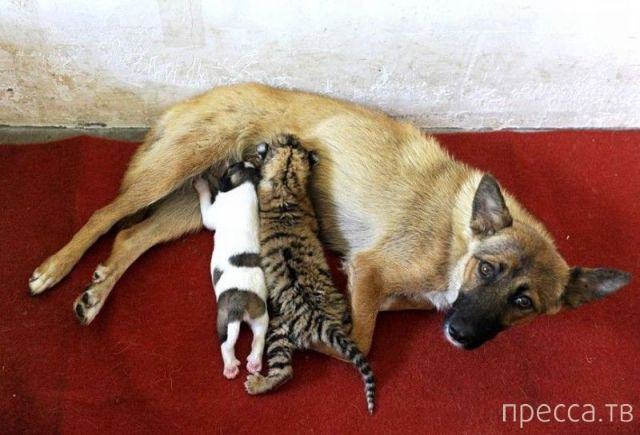 Милые и забавные животные, часть 15 (44 фото)