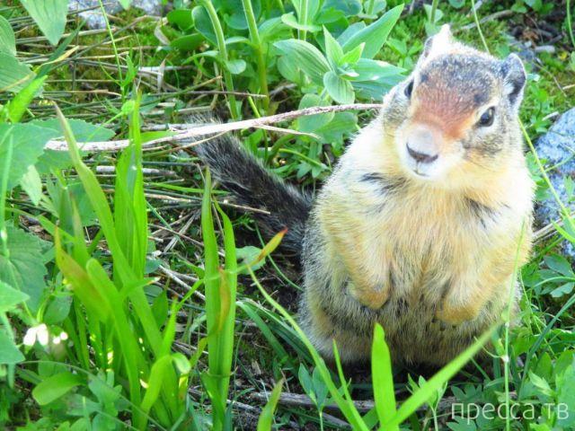 Милые и забавные животные, часть 16 (43 фото)