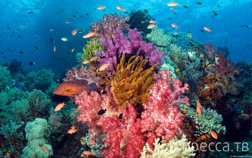 Необыкновенно красивые фотографии коралловых рифов (24 фото)