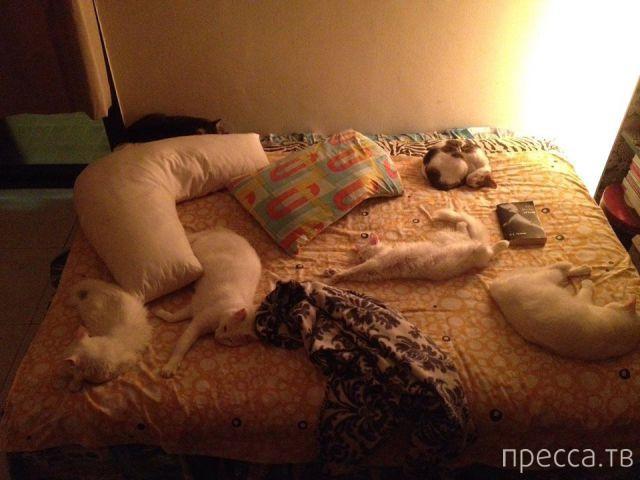 Милые и забавные животные, часть 20 (39 фото)