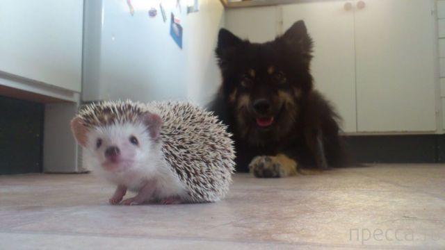 Милые и забавные животные, часть 22 (45 фото)