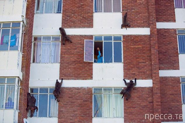 Необычная банда в Южной Африке терроризирует людей (7 фото)