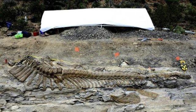 Останки динозавра, которым 72 миллиона лет, были недавно найдены на севере Мексики (7 фото)