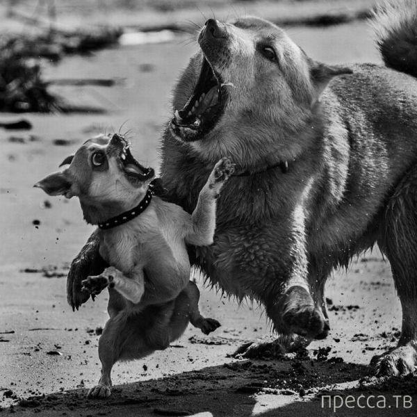 Милые и забавные животные, часть 23 (41 фото)