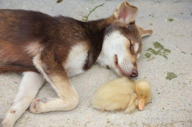 Милые и забавные животные, часть 24 (39 фото)