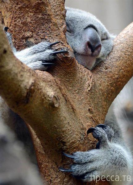 Милые и забавные животные, часть 26 (43 фото)