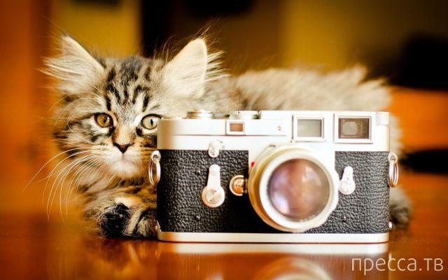 Милые и забавные животные, часть 27 (42 фото)