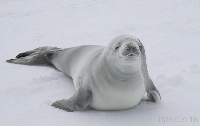 Подборка интересных фактов об Антарктиде (10 фото)
