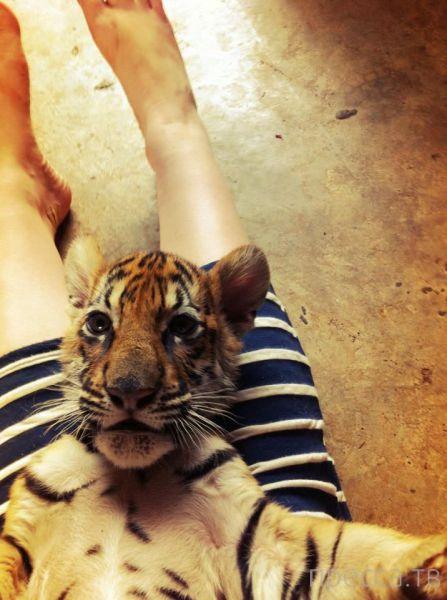 Милые и забавные животные, часть 31 (43 фото)