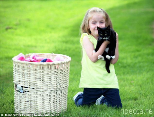 Котенка постирали в стиральной машине... (3 фото)