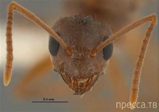 Ученые бьют тревогу: муравьи угрожают человеческому здоровью и экологии (3 фото)