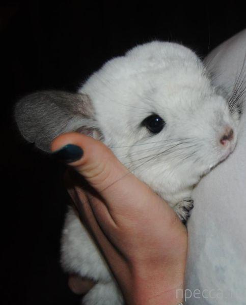 Милые и забавные животные, часть 33 (45 фото)