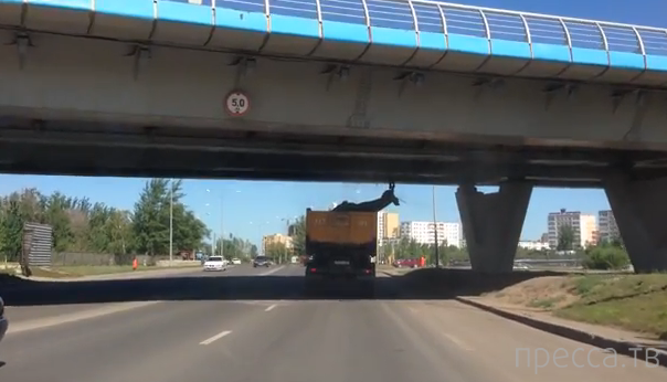 Вез статую оленя в кузове, светофор разбил, в мост врезался... ДТП в Астане, Казахстан