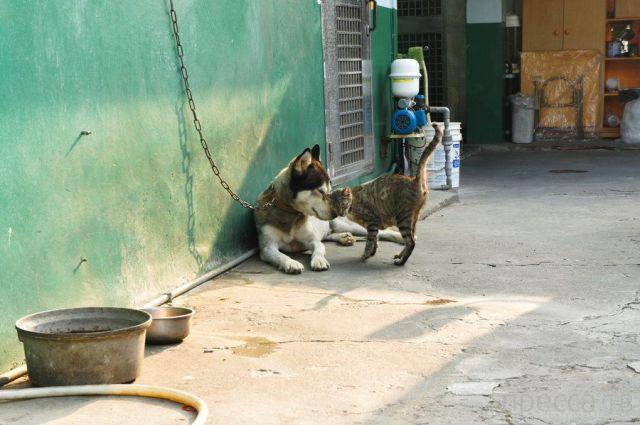 Милые и забавные животные, часть 34 (43 фото)