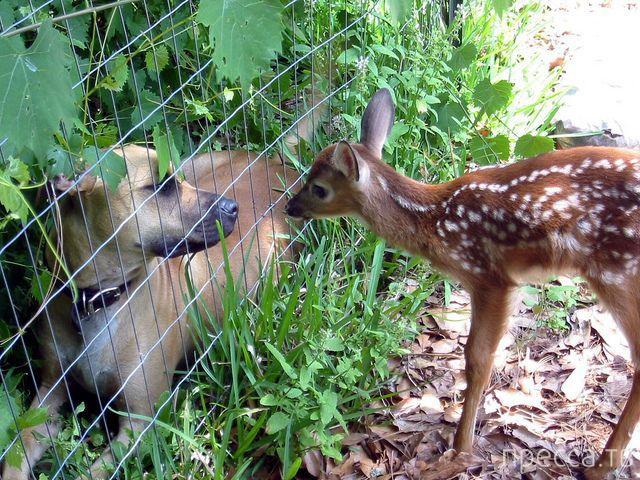 Милые и забавные животные, часть 35 (40 фото)
