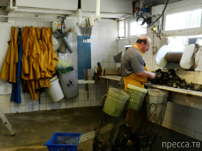 Франция. В Лёкат, знакомиться с устрицами (19 фото)
